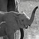 Little Squirt - Moremi Game Reserve,Botswana by Adrian Paul