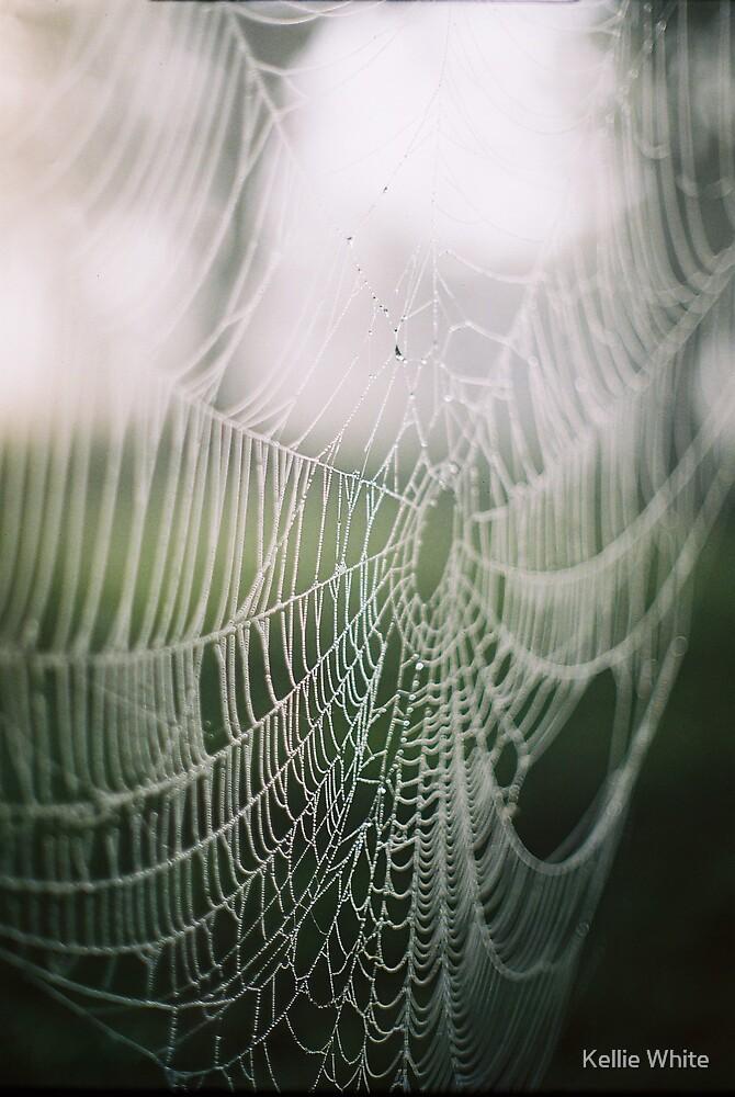 webs&mist2008 by Kellie White