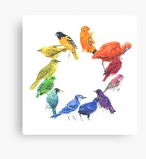 Bird colour wheel Canvas Print