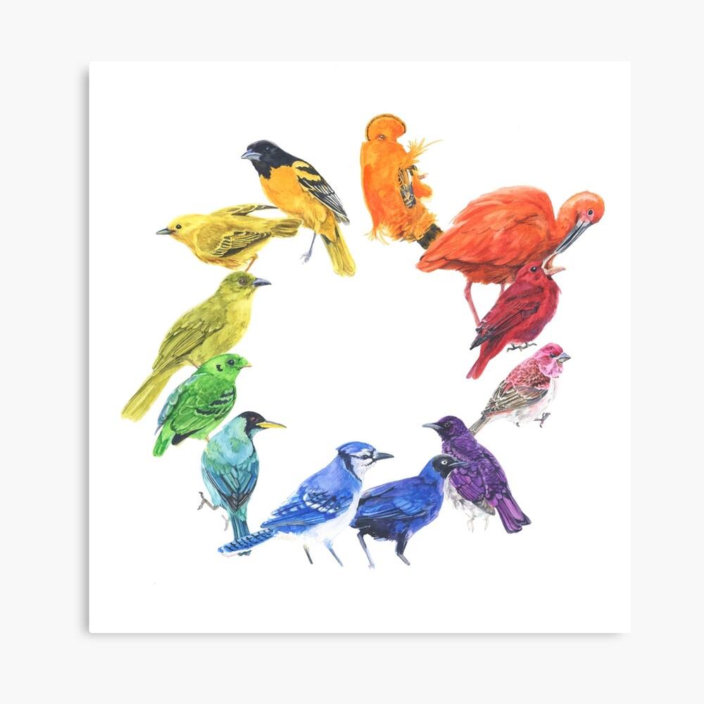 Vogelfarbrad Leinwanddruck