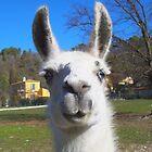 Super llama ! by daffodil