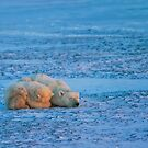 Can't bear to look by Owed To Nature