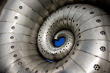 Ammonite by Jon Bradbury