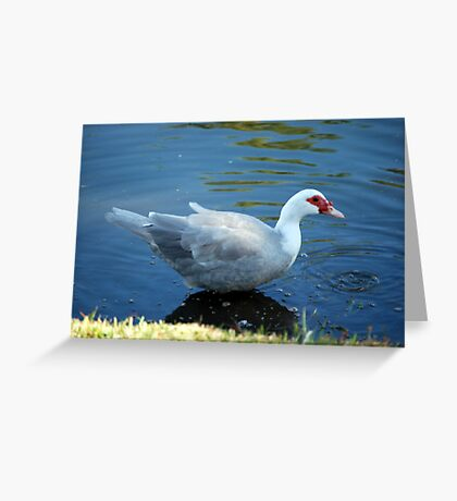 just a duck Greeting Card