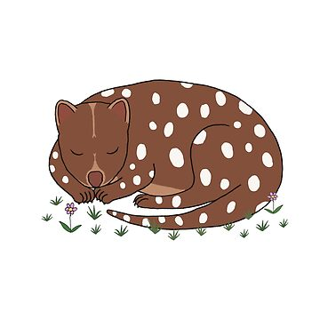 Spotted Quoll by wanungara