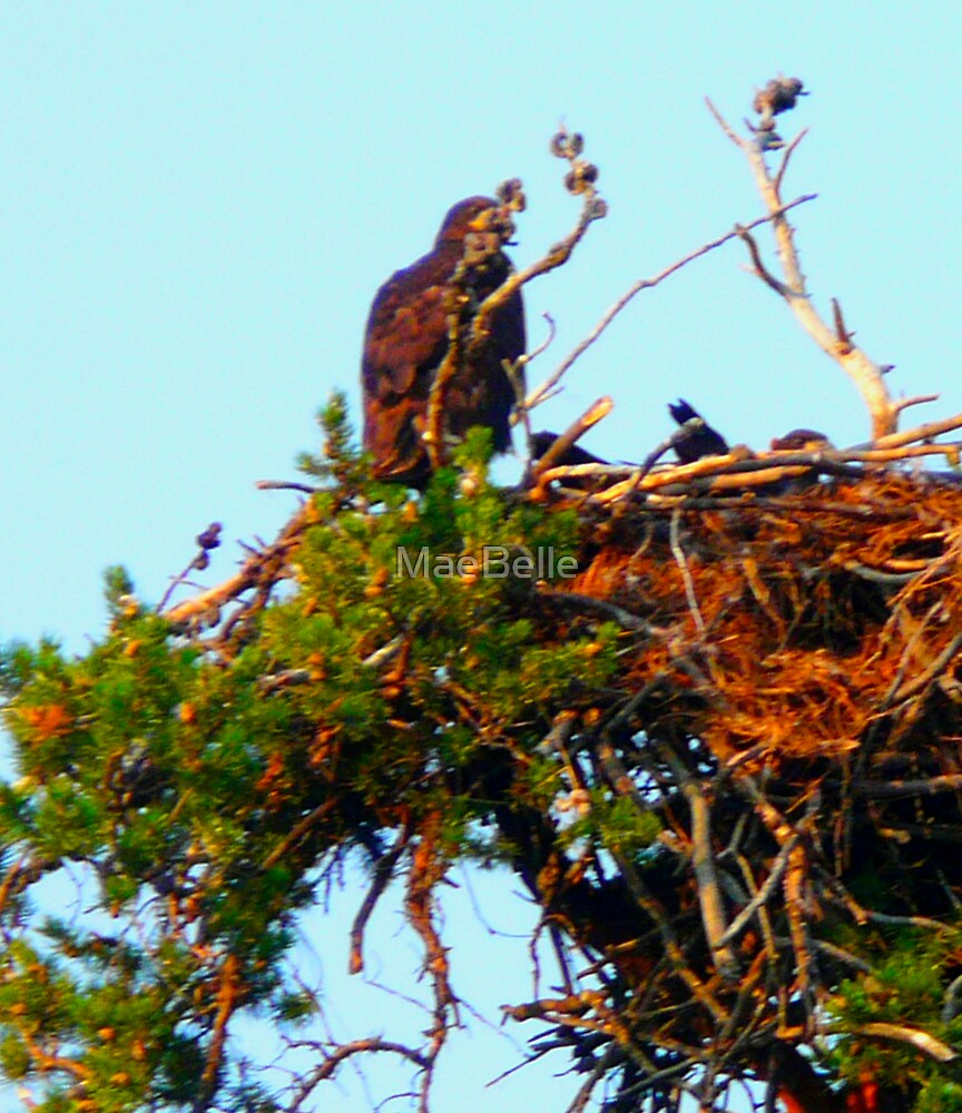 Golden Eagle,by her Nest of Babies by MaeBelle