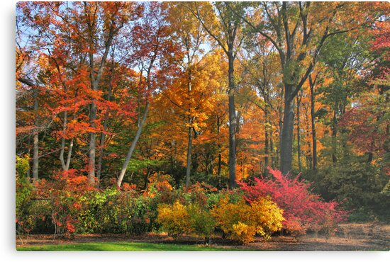 Leaves of Fall by jennydarina