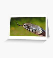 Grass Snake in UK Greeting Card