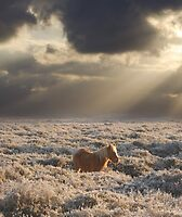 Pony in a frosty dawn, Hampshire, UK by Chris Balcombe