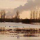 Wheldrake Ings 4 by dougie1