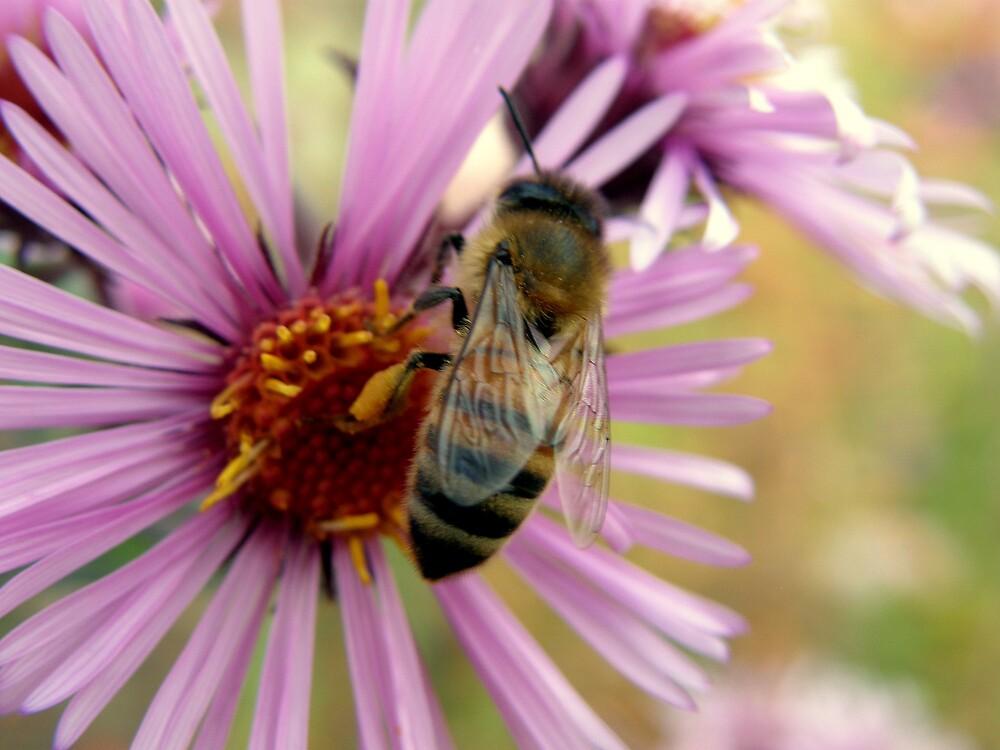 bee and flower by Cricket Jones