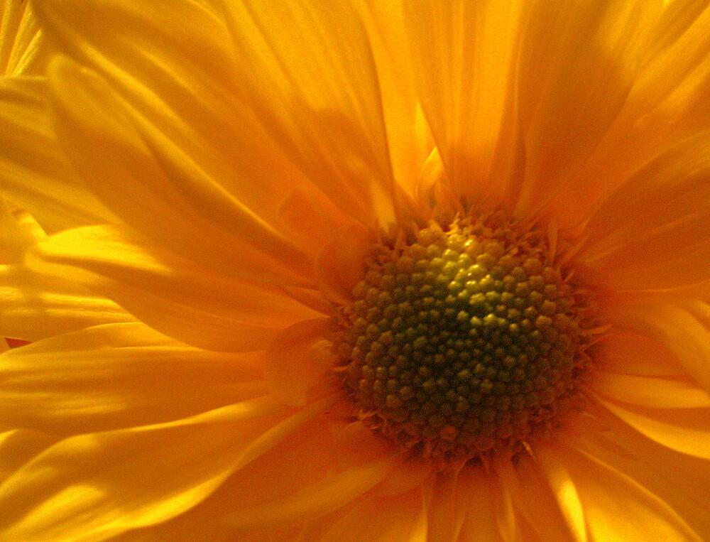 Yellow Silk by junebug076