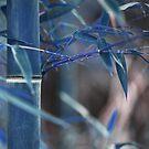 Blue bamboo by emmadellelba