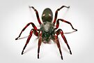 White Tail Spider by Dean Mullin