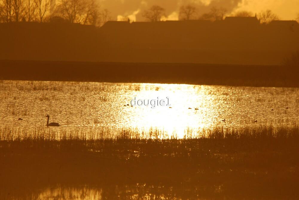 Wheldrake Ings 9 by dougie1