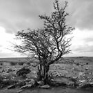 Bodmin Tree by minifignick