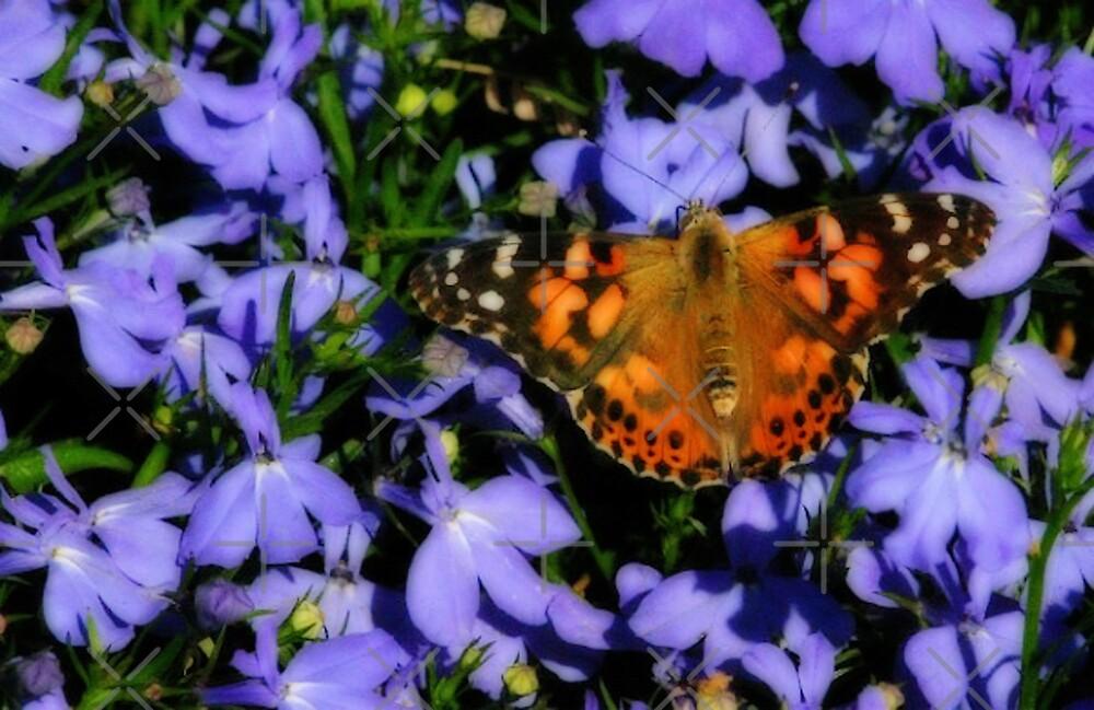 Butterfly On Purple by CarolM