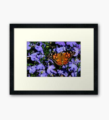 Butterfly On Purple Framed Print