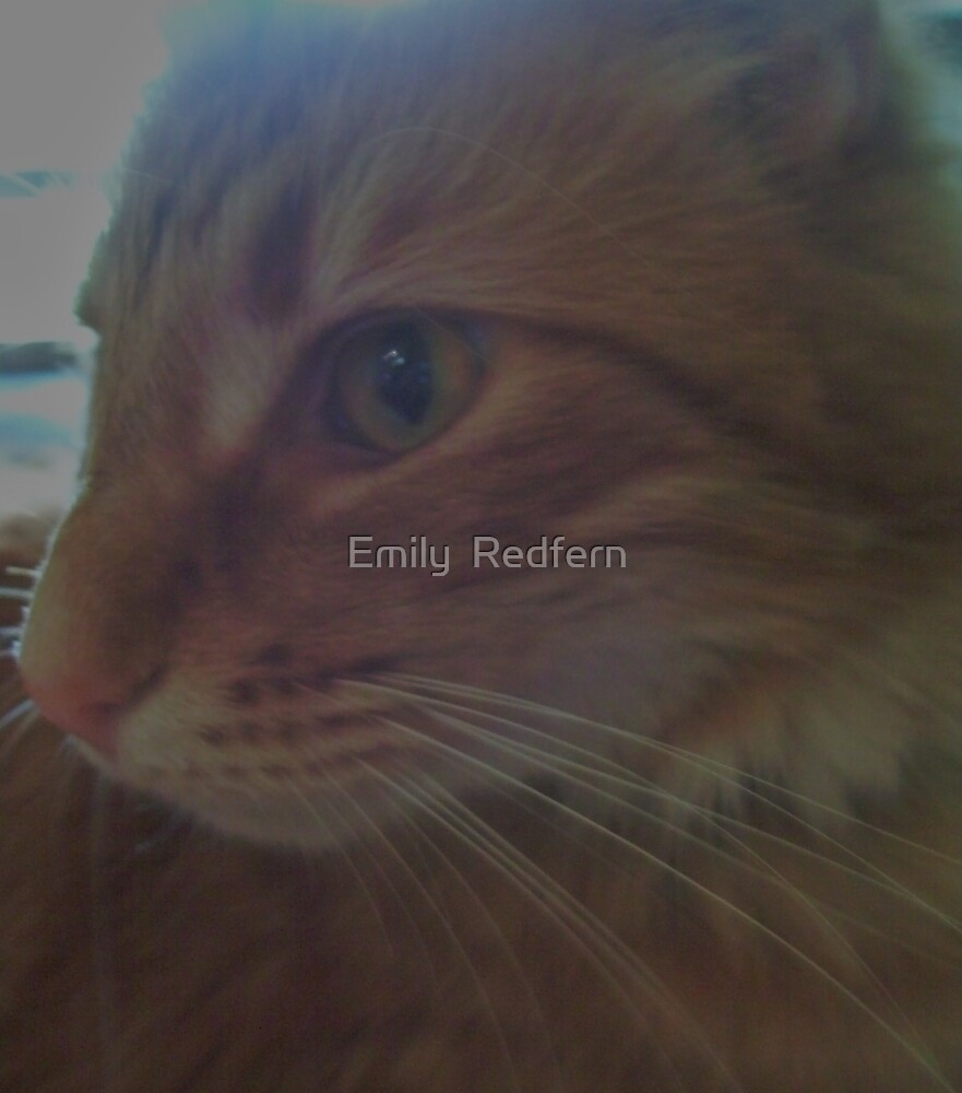 Curious Cat. by Emily  Redfern