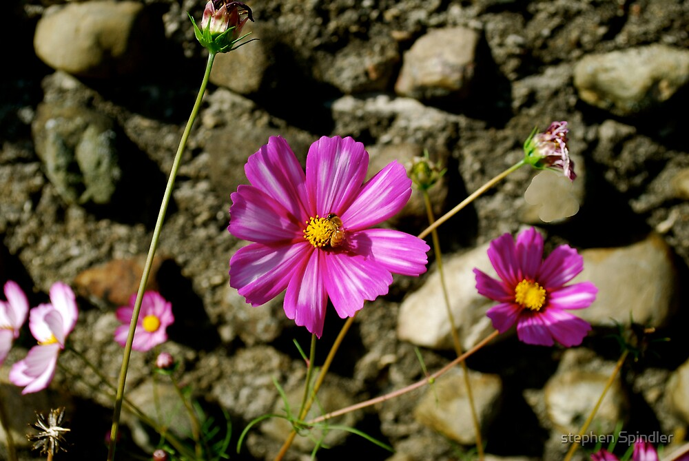 Rocks and Flowers by stephen Spindler
