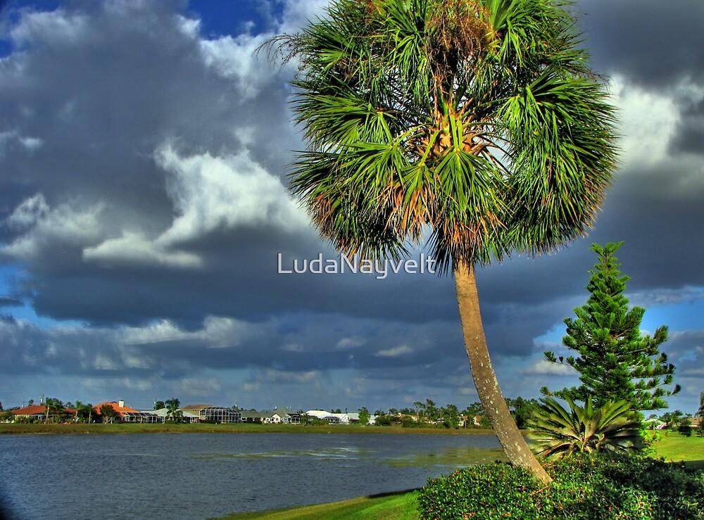 Lake of Punta Gorda, FL by LudaNayvelt