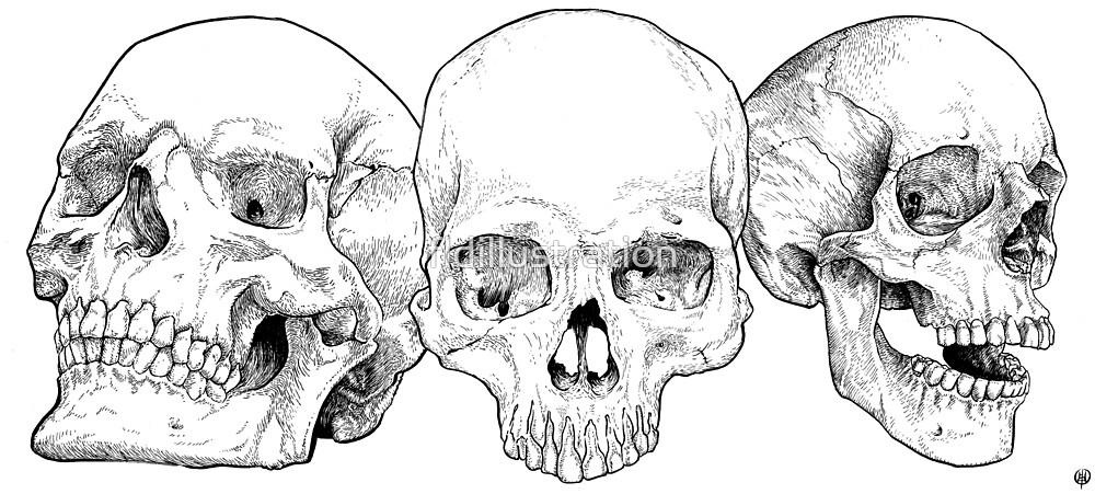 3Skull FLDillustration by fldillustration