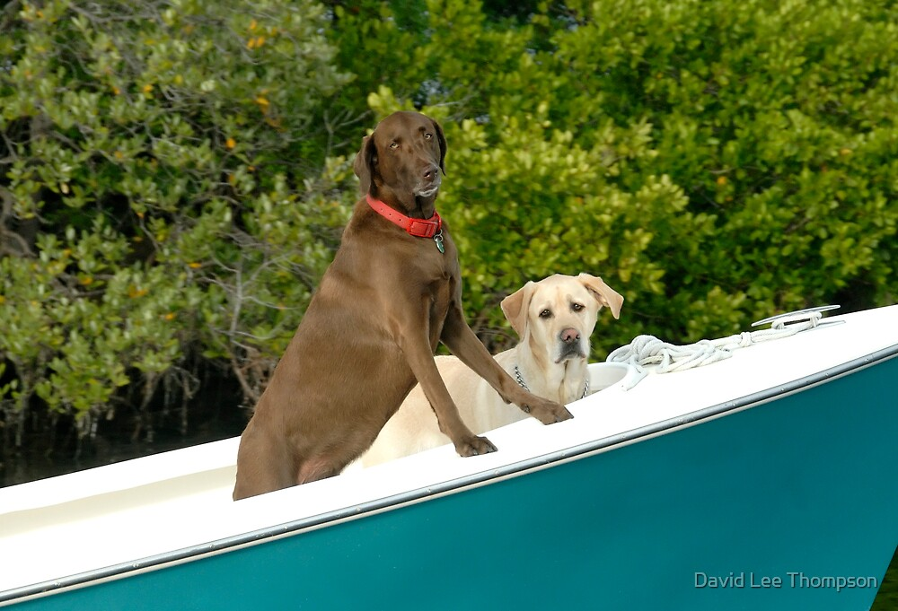 Two Pups Boating by David Lee Thompson