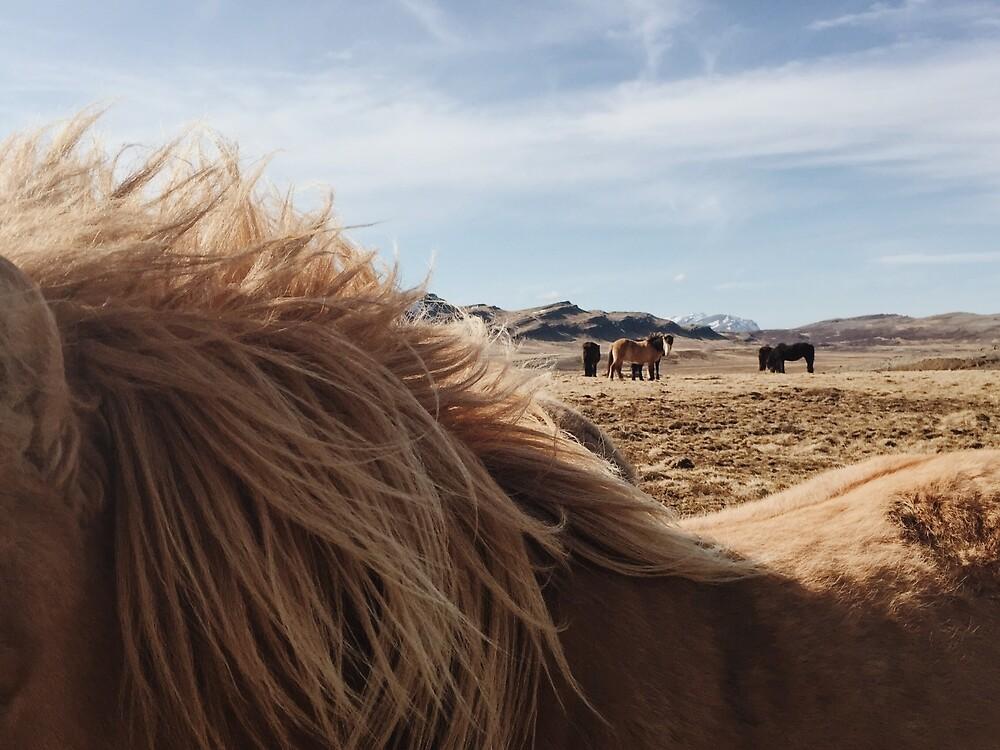 Icelandic Horses by AlexanderHarley