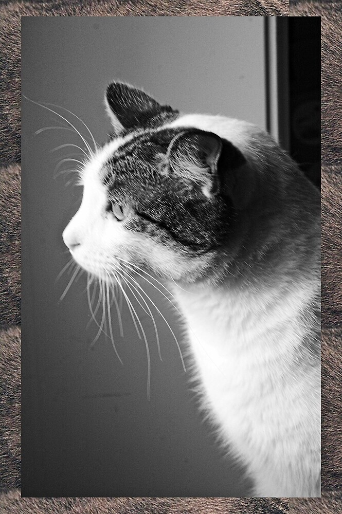 Cat in B & W 3 by Karl Rose