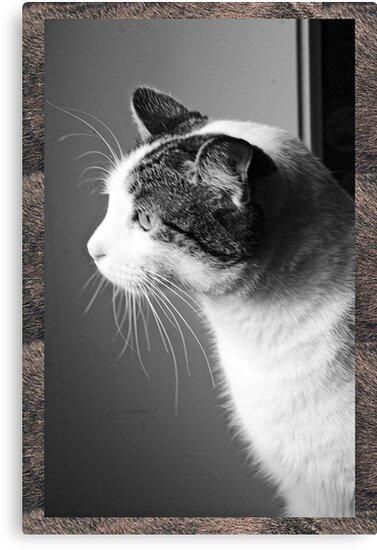 Cat in B & W 3 by Karl Rose