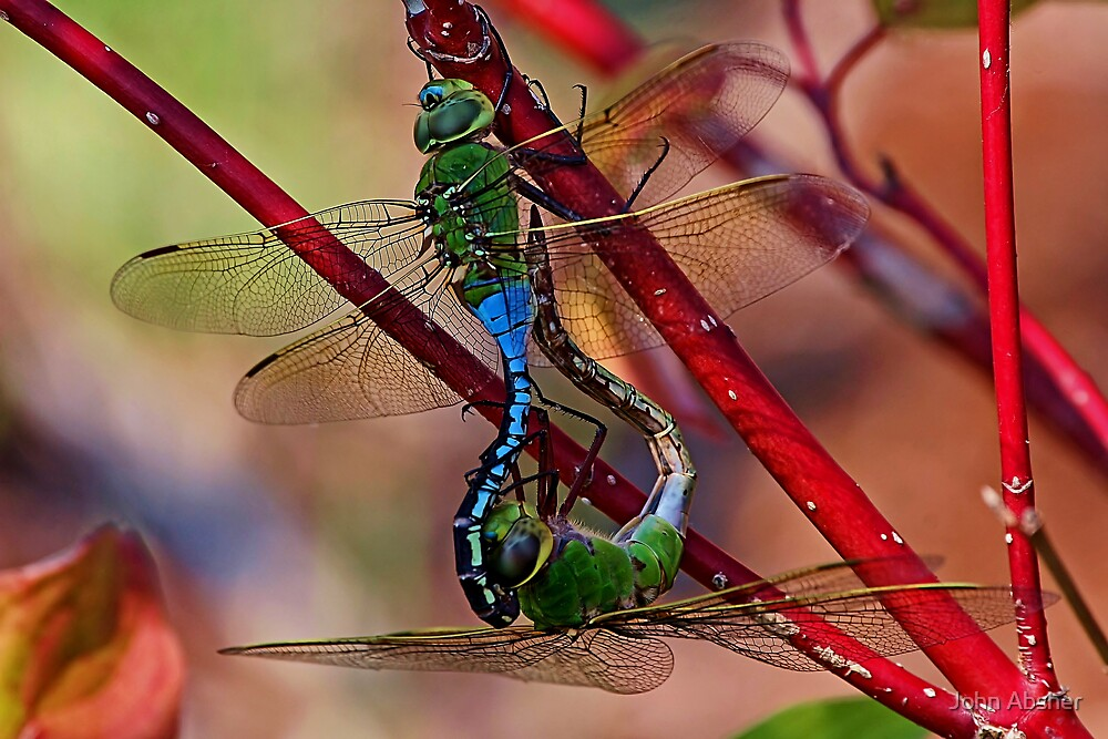 Bug Off! by John Absher