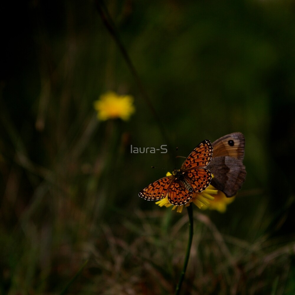 butterfly by laura-S