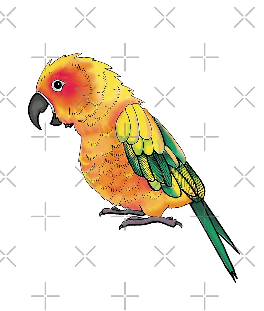 Screaming Sun Conure by VivianRosalee
