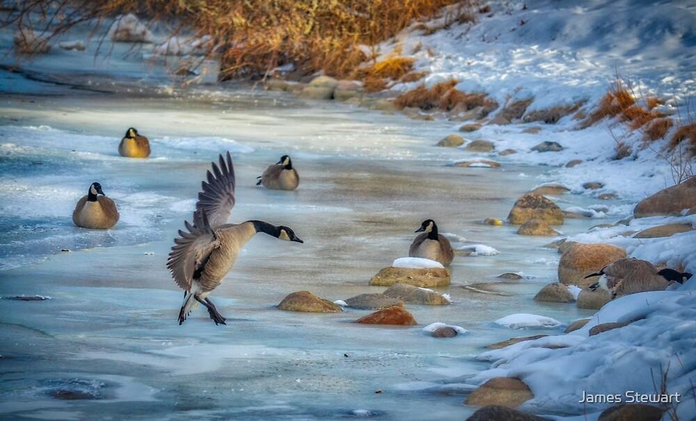 The Landing X by James Stewart