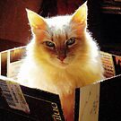 Kitty In A Box by Catherine  Howell
