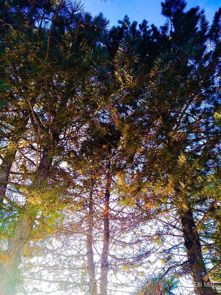 Trees by Elli Min