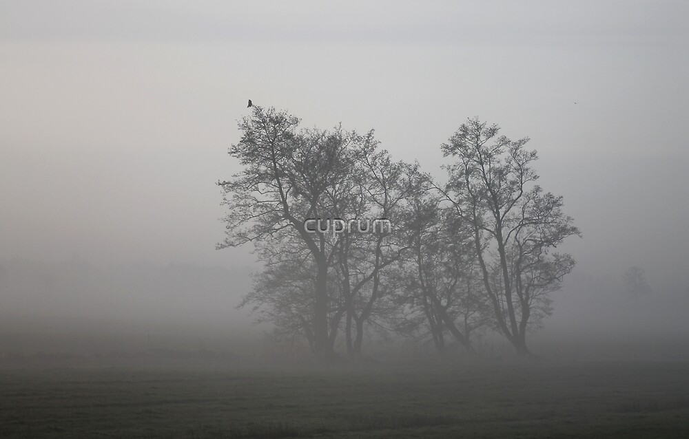 On a Grey Morning by cuprum