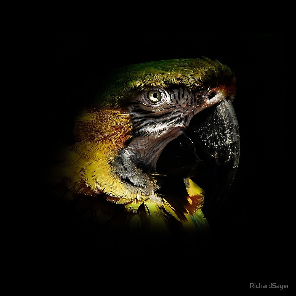 Parrot Poise by RichardSayer