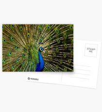 Peacock Eyes Postcards