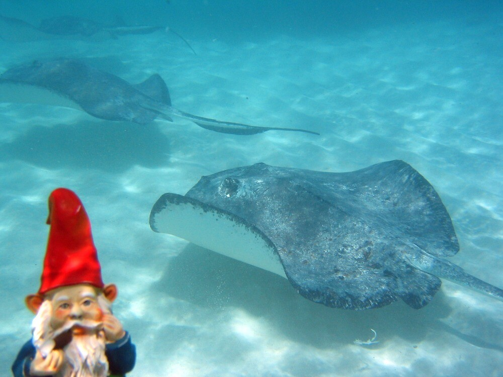 Gnome swimming with rays by johncarleton