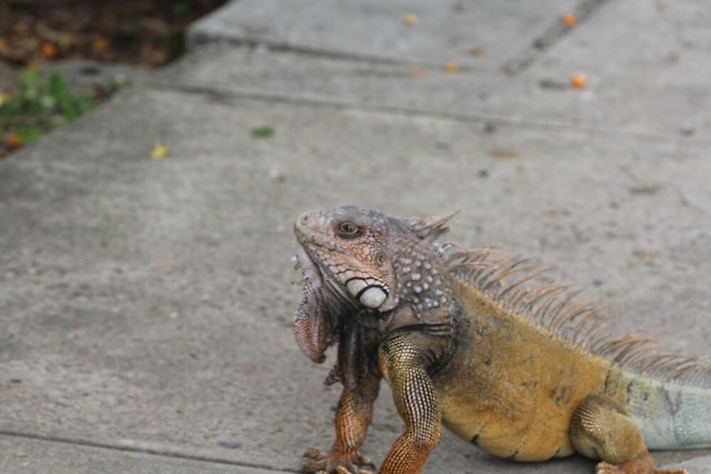 Iguana by LilDude