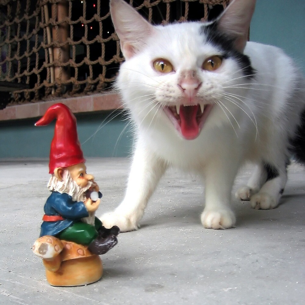 Gnome with Pissed off Pussycat by johncarleton