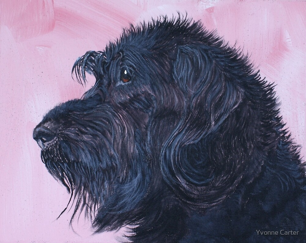 Black Labradoodle by Yvonne Carter
