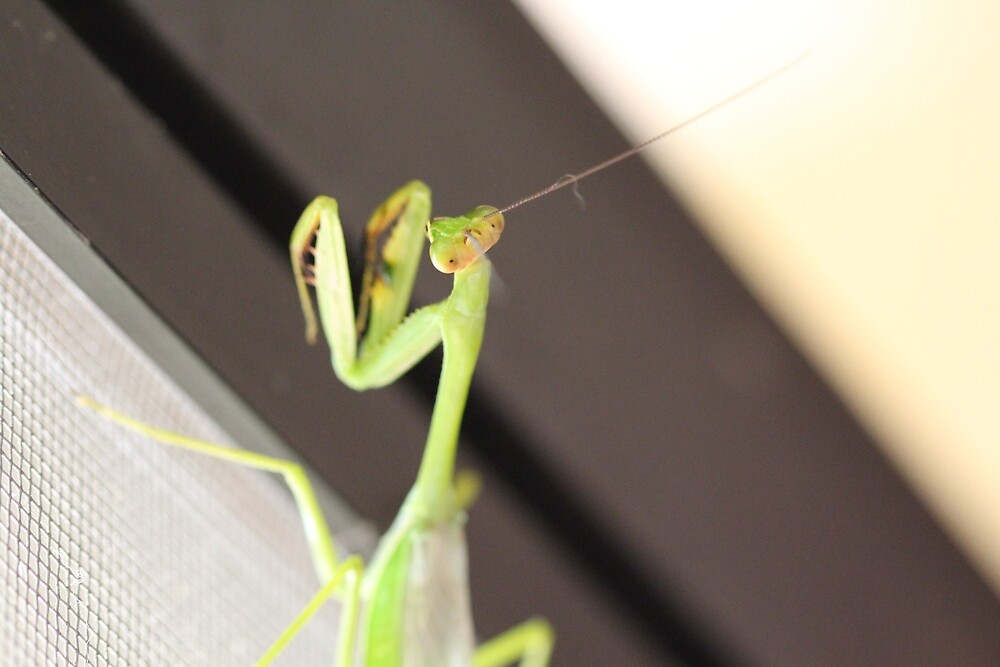 Praying Mantis by LilDude