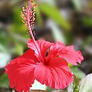 Ashleigh's Hibiscus Photograph by Emmapaige2020