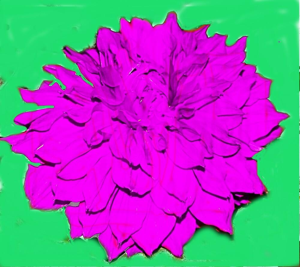 Lovely flora by Nilu Mishra