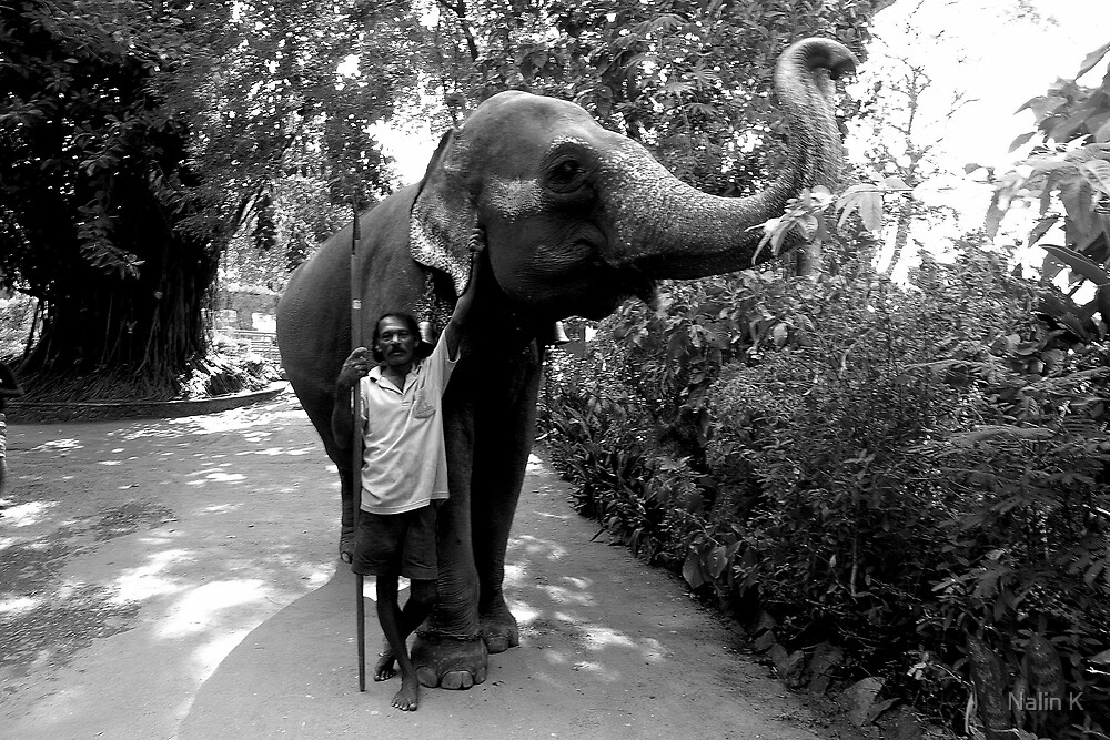 Man with his Elephant. by Nalin K