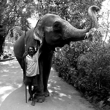 Man with his Elephant. by nalin