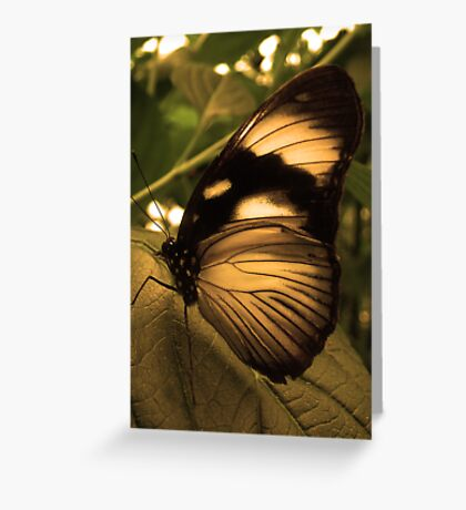 Golden Wing Greeting Card