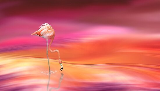 Flamingo by Igor Drondin